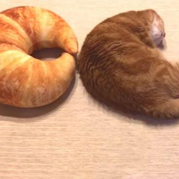 Floofy cat or crescent role? Follow for more Follow for more . ==