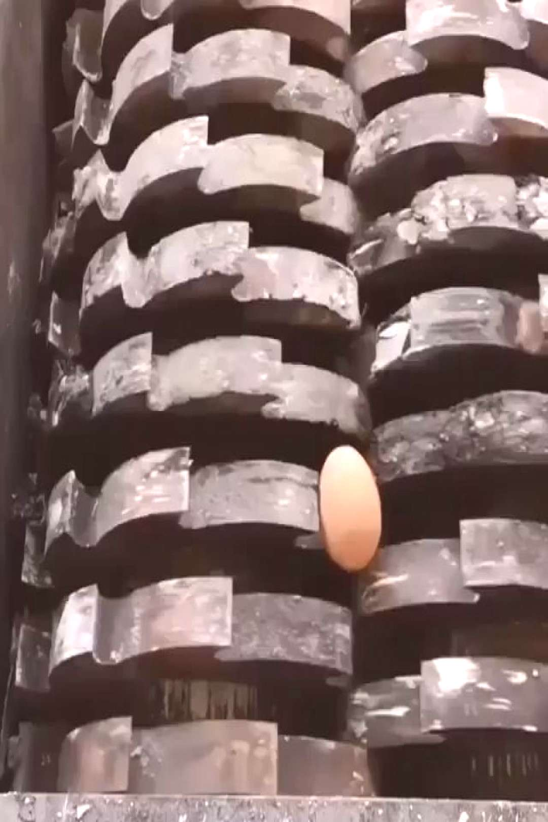 Comment EGG in your language ️LIKE IF YOU LOVE IT️ Follow quot