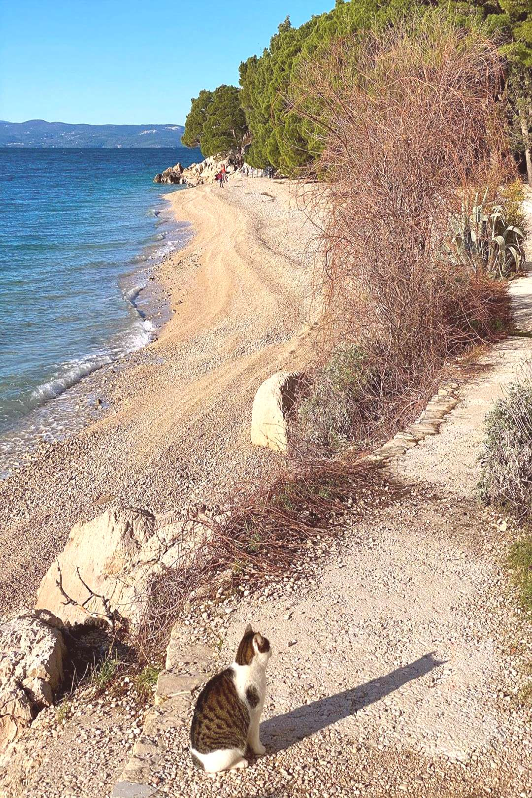 #Jadranka cat is on her place in #Tucepi All about all beaches on